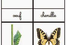 Chenille - papillon