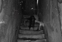 Dark / The odd and creepy I love / by Wanda