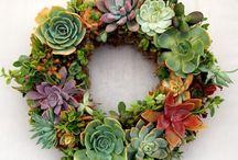 beauty = cactus & suculents