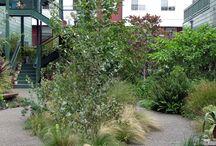 LANDSCAPE PLANTS COMPOSITION