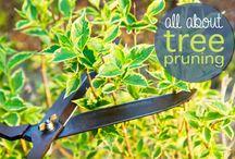 Gardening / Perennials