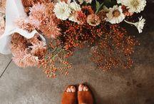 Autumn ✨