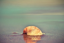 She Sells Sea Shells / Come walk with me, along the sea, where dusk sits on the land, and search with me for shells are free, and treasures hide in sand. / by Gairid
