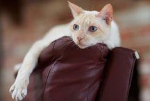 Agresja i terytorializm u kotów