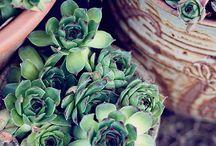 Succulents & Plant Love