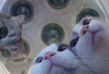 Dr Cat