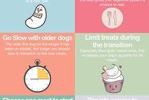 Vegan Dog Diets