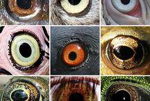 referencia olhos