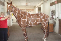 Horsie Halloween Ideas / Horsie Halloween Costume ideas. You cannot start planning too early.