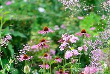 Garden Planiting schemes