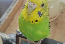 小鳥さん( •ө• )