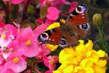 Цветы / Фото с изображением цветов можно нанести на жалюзи и тогда они долго будут радовать глаз и конечно украсят любой интерьер