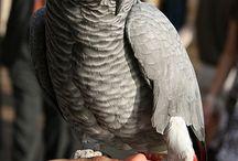 papagaaien