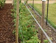 Raised Beds / by Terri Gariner