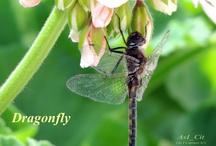 Dragonflies / by Karen Dayton