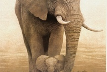 Elephants... my Favorite animal ♡