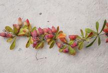 Flori&Plante