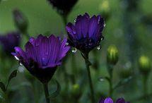 Flowers / by naniXnine_Beatriz
