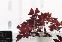 Deco - Plantes