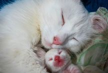 Mummy adore her tiny kitty!