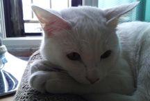 앨리 / 우리집 고양이 앨리 터앙 2013년 7월생