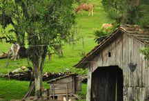 Деревня зелень