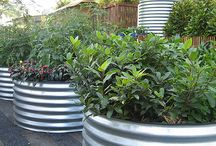 Vegetables (raised beds)