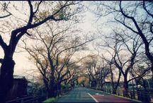 昨日、買い物の帰り道にて。 春は桜のトンネルになる道も冬支度です。 It will be come winter. #cherryblossomtrees #snapshot #autumn #takeawalk #桜のトンネル #冬支度写真