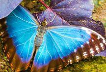 bloemen/vlinders
