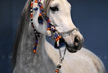 Arabian Horses ♡ / I love arabians ^.^