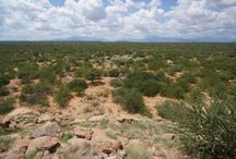 Frankincense, the pearl of Northern Kenya / Earlier this year, Susan Curtis, our Director of Natural Health, visited Northern Kenya to meet the women who collect the beautiful FairWild certified Frankincense which we use in our new Frankincense Intense. Have a look at these gorgeous photos from her trip! / by Neal's Yard Remedies