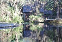 Ocala National Forest / Uma Floresta Nacional, para fugir um pouco do burburinho de Orlando