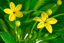 Un angolo di natura in casa / Le più belle e decorative piante per decorare la casa!