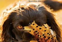 Hunting Magazines / Hunting Magazines