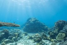 Imagens aquáticas do Google Maps