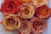 druhy květů