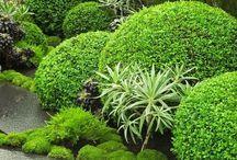 ogród pamiątkowa