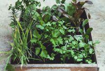 kert + növények