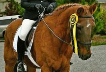 Horses I Cai I Fluxymedia