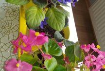 Çiçek / Çiçekler