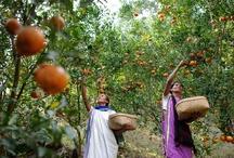 Economic Development / Micro-finance / by World Vision USA