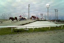 Le Ban'ei / C'est une race très populaire dans son pays d'origine où elle est utilisée dans des courses spéciales nommées trait tract. Les Japonais sont tellement férus de courses hippiques, qu'ils ont inventé cette course de chevaux de trait qui tractent de lourdes charges et le Ban'ei a même été spécialement crée pour ce genre d'épreuve.