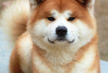 Милые собаки