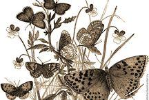 карт бабочки