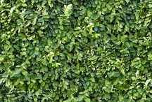 Hedges textures seamless / royalty free professional hedges textures seamless for architectural 3d visualization and all CG artist