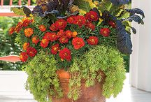 Container Gardening / by Deeanna Cardell
