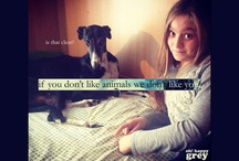 If you don't like animals...