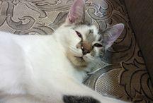 Мартин / Мой котя, который потерялся или его затощили куда-то, есть безответственные люди.