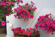 Garden And Outdoor / Garden And Outdoor