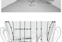 sciatica relief sciatic nerve